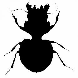 Бръмбар