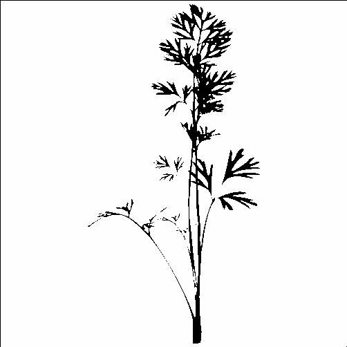 Стрък