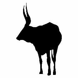 Бивол