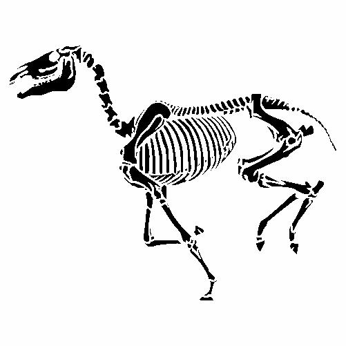 Конски скелет