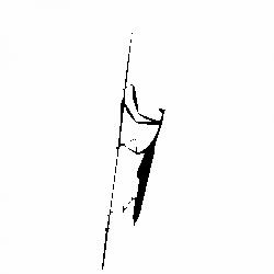 Богомолка